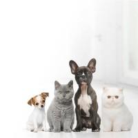 Produtos para Animais